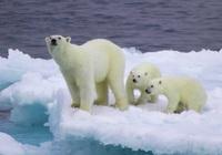 Khủng hoảng năng lượng biến Bắc Cực thành mặt trận mới trong căng thẳng EU - Nga