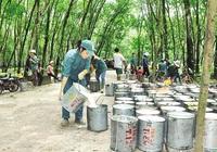 Cao su Đắk Lắk (DRI): 9 tháng lãi hơn 61 tỷ, vượt 34% kế hoạch năm