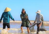 Clip - Ảnh: Sò lông xuất hiện dày đặc ở bờ biển Hà Tĩnh, ngư dân có ngày vớt được  tới 5 tạ
