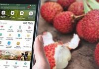 Hải Dương bán nông sản trên chợ online Alibaba, Lazada, Sendo