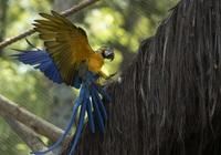 Hình ảnh lạ: Chú vẹt quý hiếm cô đơn hơn 20 năm qua