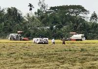 Lúa được mùa được giá, nông dân thu lãi khoảng 50 triệu đồng/ha