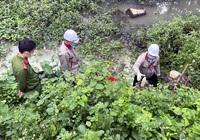 """Quảng Ninh: Xả nước thải """"bẩn"""", một doanh nghiệp bị phạt 80 triệu đồng"""