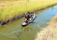 Người dân và doanh nghiệp cùnglàm để cótôm sinh thái, lúa hữu cơ