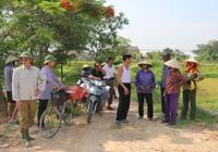 """Nghệ An: Lúa chín rục ngoài đồng, dịch vụ gặt máy tăng giá gấp 3, nông dân vẫn """"dài cổ"""" chờ máy gặt"""