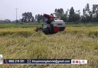 Nghệ An: Khan hiếm máy gặt, lúa chín bổ rạp đầy đồng bà con nông dân như ngồi trên đống lửa