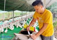 Kỹ sư khởi nghiệp với mô hình chăn nuôi