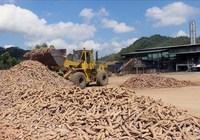 Cân nhắc xây dựng nhà máy tinh bột sắn tại Sơn Hòa (Phú Yên)