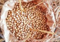 Nông sản tuần qua: Giá gạo Việt Nam giảm nhẹ, gạo Thái Lan còn được chào bán thấp hơn
