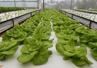 Lâm Đồng ban hành tiêu chí sản xuất nông nghiệp công nghệ cao