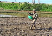 Hà Tĩnh: Nông dân tất bật gieo lại lúa sau ảnh hưởng của cơn bão số 2