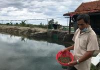 Có vốn Agribank, người nuôi ốc hương ở Khánh Hòa đổi đời