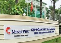 Giá tôm nguyên liệu tăng mạnh vì Ấn Độ, Thuỷ sản Minh Phú dồn hàng cho dịp cuối năm
