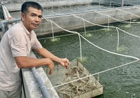 Clip: Nông dân Quảng Bình chia sẻ cách nuôi tôm vụ nào cũng thắng lớn