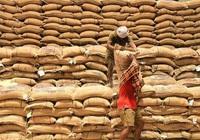 Thị trường nông sản thế giới tuần qua: Giá gạo Thái Lan, Ấn Độ giảm