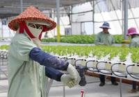 Công nghệ Israel đang góp phần hiện đại hóa ngành nông nghiệp Đông Nam Á như thế nào?