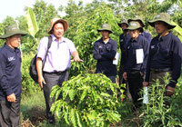 Chương trình cảnh quan bền vững giảm chi phí, tăng thu nhập cho nông dân