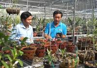 Đà Nẵng: Khám phá vườn lan rừng quý hiếm, thu lãi hơn 1 tỷ đồng/năm
