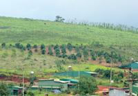 """Đắk Nông: Chủ đầu tư """"mất hút"""", dự án cụm công nghiệp bị lấn chiếm thành …cụm dân cư"""