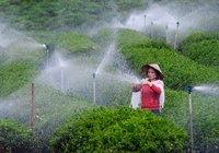 Lắp camera theo dõi rau, gắn chip lên bò sữa - ngành nông nghiệp Lâm Đồng đang bứt tốc (bài 2)