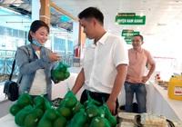 Quảng Nam: Mở rộng diện tích trồng cam sành Trà Dương để giúp nông dân miền núi tăng thu nhập.