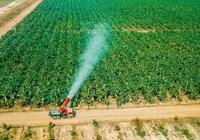 Không có chuyện THACO buông mảng nông nghiệp