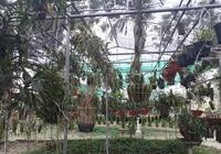 Thái Nguyên: Xây trung tâm bảo tồn và phát triển lan hơn 20.000m2