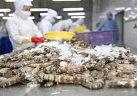 Chi phí bán hàng tăng vọt, quý II  công ty mẹ Thủy sản Minh Phú (MPC) đạt 76,5 tỷ, giảm 28%