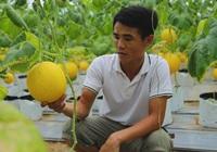 Mang giống dưa vàng về trồng trên vùng đất cày lên sỏi đá, anh nông dân thu lợi nhuận hàng trăm triệu đồng mỗi năm
