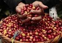 Giá nông sản hôm nay 3/8: Heo hơi cao nhất 56.000 đồng/kg, cà phê giảm nhẹ