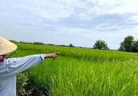 Đồng Tháp được phép chuyển hơn 31 ha đất trồng lúa sang phi nông nghiệp