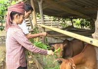 Huyện miền núi đặc biệt khó khăn tìm hướng hỗ trợ nông dân phát triển kinh tế