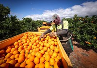Làm nông nghiệp kiểu Australia