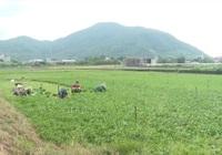 """Bà Rịa - Vũng Tàu: Nông dân """"vùng xanh"""" khôi phục sản xuất, tiêu thụ nông sản"""