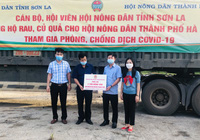Hội Nông dân Sơn La hỗ trợ hàng trăm tấn nông sản cho các địa phương chống dịch