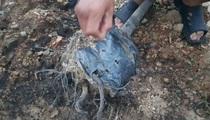 Bình Phước: Vườn cây trong công viên vừa trồng 2 tháng, cây chết hàng loạt