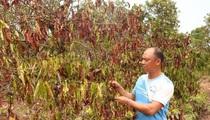 Thứ trưởng Bộ NNPTNT Nguyễn Hoàng Hiệp: Đầu tư ngân sách 30.000 tỷ đồng chống hạn mặn