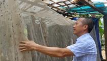 Lạng Sơn: Nuôi ruồi lấy trứng chăn nghìn con gà vàng như rơm, thương lái tranh nhau mua