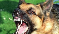 Bé trai 7 tuổi tử vong nghi do chó dại cắn từ 2 tháng trước