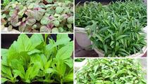 Mẹ bỉm sữa mách trồng 5 loại rau xanh tốt vù vù đầu tháng 7