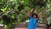Đồng Nai: Các chủ vườn đua nhau tranh giành giải vườn kiểu mẫu