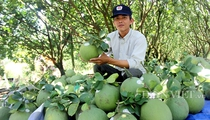 Trung Quốc, Mỹ tăng mạnh nhập khẩu loại nông sản này, giá nhiều loại quả trong nước lên như diều gặp gió