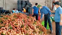 Báo NTNN/ Điện tử Dân Việt kết nối, hỗ trợ tiêu thụ vải thiều Bắc Giang