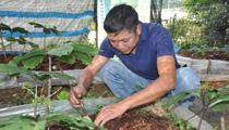 Đang làm đầu bếp lương cao, chàng trai bỏ lên núi trồng sâm, giờ có trong tay tiền tỷ