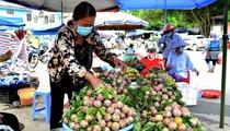 Lào Cai: Đưa mận tam hoa Bắc Hà lên sàn điện tử, mạng xã hội, mận ngố giá lên tới 30.000 - 40.000 đồng/kg