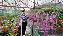 Lai Châu: 8X bỏ việc nhà nước về trồng vườn lan rừng Hoàng thảo kèn bạc tỷ vạn người mê
