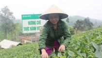 Phú Thọ: Đưa vốn lên vùng cao giúp đồng bào làm giàu