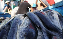Bình Định: Vi phạm quy định, 4 chủ tàu đánh bắt xa bờ bị phạt 3,6 tỷ