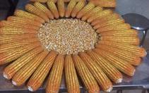 Trung Quốc tăng thu mua nhiều nguyên liệu thức ăn chăn nuôi