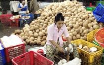 Giá dừa khô tăng mạnh